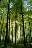 Waldlandpollock-Nationalpark Stockfotos