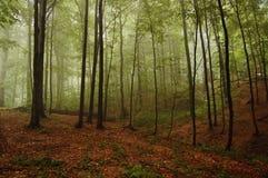 Waldlandschaft Stockfotos