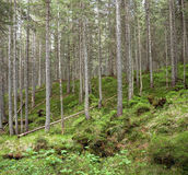 Waldlandschaft Stockfoto