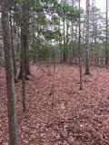 Waldlandschaft in den östlichen Vereinigten Staaten lizenzfreies stockfoto