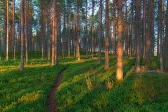 Waldlandschaft an der Dämmerung Stockbild