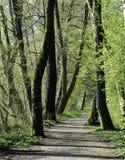 Waldlandschaft die Schweiz Aargau Beinwil morgens sehen Uferzone stockfotos