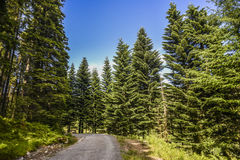 Waldlandschaft an einem sonnigen Sommertag in Bergen, Norwegen Lizenzfreie Stockfotos