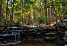 Waldlandschaft im Schwalben-Nebenfluss-Nationalpark, Maryland Stockfotografie