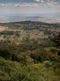 Waldlandschaft mit Berg  Lizenzfreies Stockfoto