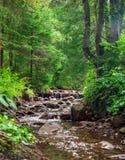 Waldlandschaft mit Felsen an einem sonnigen Tag Stockfotos