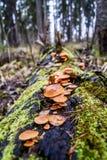 Waldlandschaft mit Pilzen auf einem Baum stockbilder