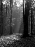 Waldlicht im Herbst Stockfotos