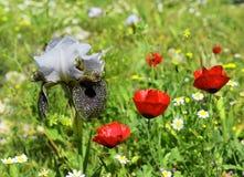 Waldlichtung mit blühenden Blumen Lizenzfreie Stockfotos