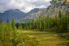 Waldlichtung umgeben durch Bäume und Berge Lizenzfreies Stockbild