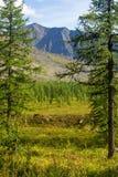 Waldlichtung umgeben durch Bäume und Berge Stockbilder