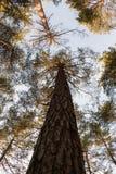 Waldmorgens Leuchte lizenzfreie stockbilder