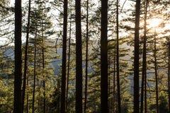 Waldmorgens Leuchte lizenzfreie stockfotos