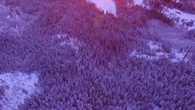 Waldmorgenwinter-Sonnenaufgangsonne stock video