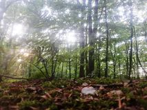 Waldnahaufnahme lizenzfreie stockbilder