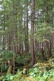 Waldnahaufnahme lizenzfreies stockfoto