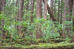 Waldnahaufnahme lizenzfreie stockfotos