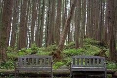Waldnahaufnahme lizenzfreies stockbild