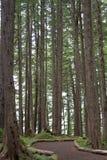 Waldnahaufnahme stockbild