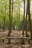Waldnationalpark von Mafra Lizenzfreie Stockfotografie