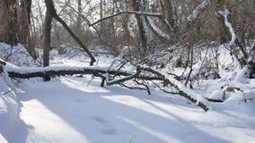 Waldnatur gefrorener Strom in den Schneeoberteilen Bäumen gestalten landschaftlich stock footage