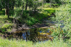 Waldnebenfluß stockfotos