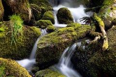 Waldnebenfluß, der zwischen Moos strömt Stockbilder