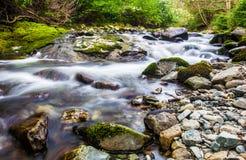 Waldnebenfluß in Tollymore Forest Park lizenzfreie stockfotos