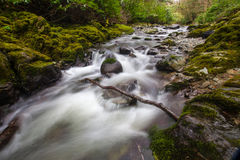 Waldnebenfluß in Tollymore-Park stockbild