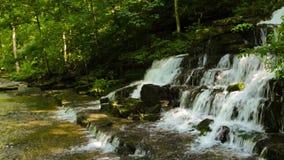 Waldnebenfluß und -wasserfall Stockbild