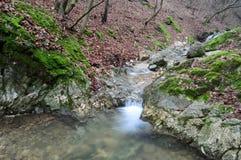 Waldnebenflusswasserfälle Stockfotos