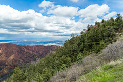 Waldo canyon fire colorado springs. Trees that survived the forest fire in front of the burnt forest of the waldo canyon fire that took place in colorado springs Royalty Free Stock Image
