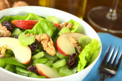Waldorf Salad Stock Images