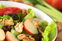 Waldorf Salad Royalty Free Stock Photo