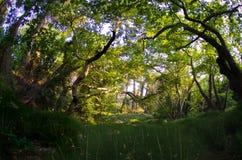 Waldornamental bedeckt fisheye mit Gras Stockfotos