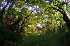 Waldornamental bedeckt fisheye mit Gras Lizenzfreies Stockbild