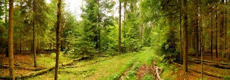 Waldpanorama lizenzfreies stockbild