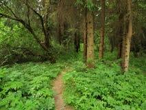 Waldpfad Stockfotos
