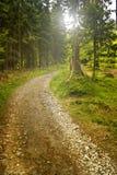 Waldpfad Lizenzfreie Stockbilder