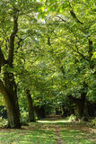 Waldpfad Lizenzfreies Stockbild