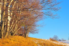 Waldpfad Stockfoto
