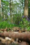Waldpfad lizenzfreies stockfoto