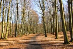 Waldpfad auf Ruegen Insel Stockfotografie