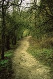 Waldpfad in Chipstead Lizenzfreies Stockbild