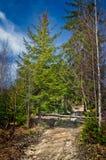 Waldpfad in den Bergen Stockbild