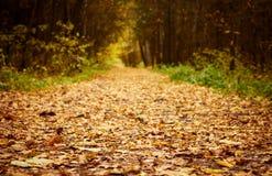 Waldpfad an der Herbstjahreszeit. Lizenzfreies Stockfoto
