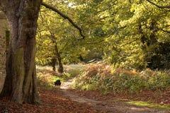 Waldpfad im Herbst Lizenzfreie Stockbilder