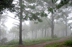 Waldpfad im Nebel Stockbild