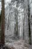 Waldpfad im Winter stockbild