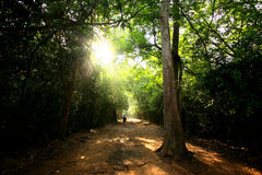 Waldpfad mit Sun-Leuchte zu Ta Prohm Stockfotografie